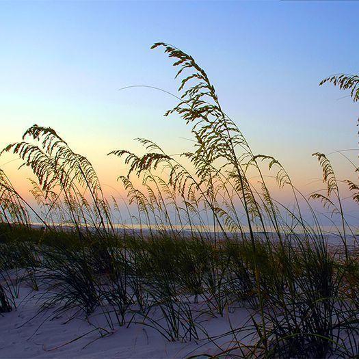 Pawleys Island Beach: Jobs At Litchfield Beach & Golf Resort, Pawleys Island, SC