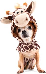 Cute photo of Hospitality Hound